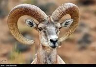 Iran's Fars Province Kamjan Shiraz Animals 003