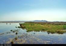 Iran's Fars Province Kamjan Shiraz Animals 010