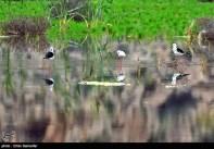 Iran's Fars Province Kamjan Shiraz Animals 013