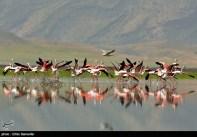 Iran's Fars Province Kamjan Shiraz Animals 014