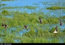 Iran's Fars Province Kamjan Shiraz Animals 020