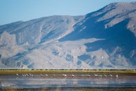 Iran's Fars Province Kamjan wetlands004