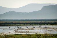 Iran's Fars Province Kamjan wetlands006