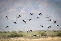 Iran's Fars Province Kamjan wetlands010