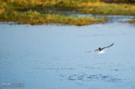 Iran's Fars Province Kamjan wetlands011