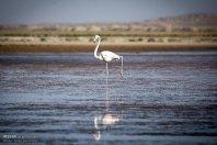 Iran's Fars Province Kamjan wetlands014