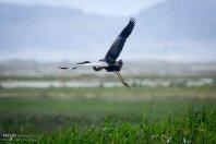 Iran's Fars Province Kamjan wetlands023