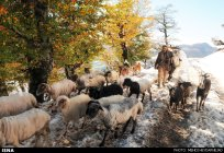 Gilan, Iran – Autumn - Snow in Talesh 01