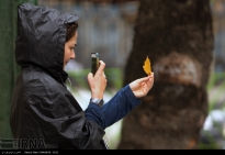 Tehran, Iran - Autumn nature - 41