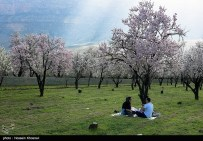First spring signs in Shiraz - Fars Province, Iran - (Photo credit: Hossein Khosravi / Tasnim News Agency)
