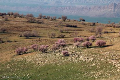First spring signs in Rumeshgan - Lorestan Province, Iran - (Photo credit: Behrouz Bazvand / Mehr News Agency)