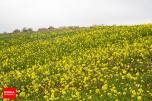 Early spring days across North Khorasan Province - Photo credit: BORNA News Agency