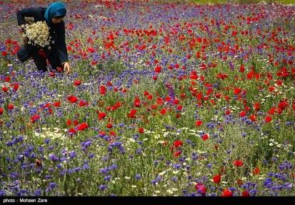 Ardabil, Iran - Spring days across Ardabil Province 31