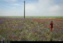 Ardabil, Iran - Spring days across Ardabil Province 36