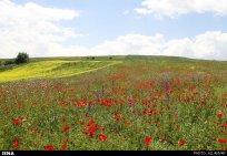 Ardabil, Iran - Spring days across Ardabil Province 55