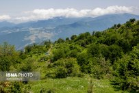 Semnan and Golestan Provinces, Iran - Cloud Forest (Jangal-e Abr) - 04