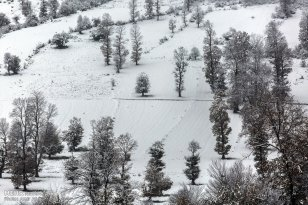 Autumn snow in Sari - Mazandaran, Iran (Photo credits: Amir Ali Razzaghi, MEHR)