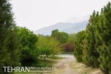Photo credit Shayan Mehrabi, tehranpicture.ir