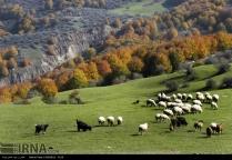 Gilan Province, Iran. Photo credit IRNA